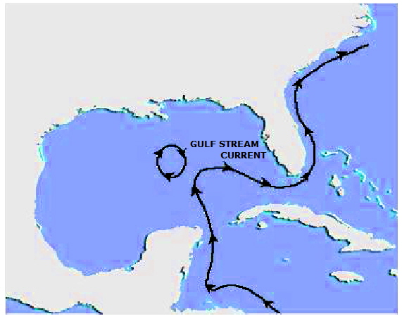 formation of EDDY in the Gulf